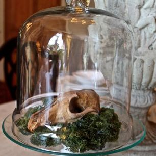 Skull in dome