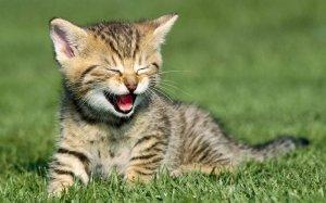 laughing_cat_by_warriorcatiu-d7d9rig